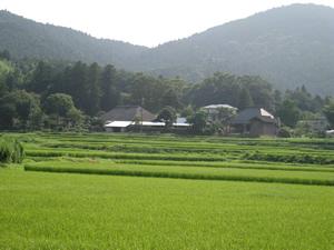 画像:里山風景03