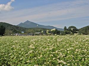 画像:里山風景07