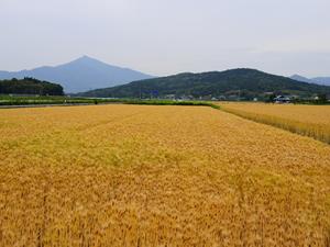 画像:里山風景08