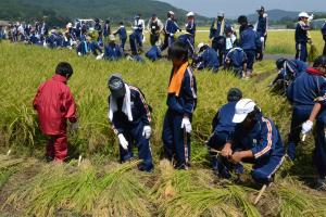画像:稲刈り(2)