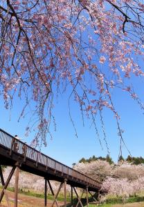 『H24フラワーパーク・風土記の丘部門入選絶景の見える橋丸橋勝造』の画像