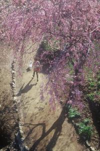 『H25フラワーパーク部門入選「春にスキップ」』の画像