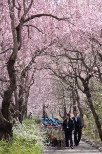 『H26 茨城県知事賞 お花見遠足 佐々木隆』の画像