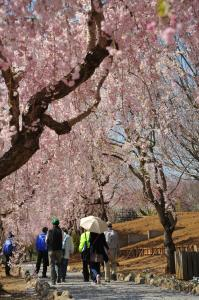 『H26入選 ああ春の日 生井恭子 向き修正』の画像