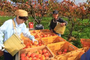 『石岡市長賞『収穫の里』 藤井浩一』の画像