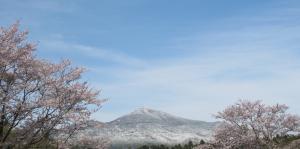 『入選 『桜と雪の筑波山』 小松﨑和男』の画像