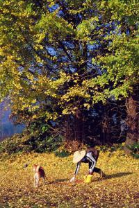 『入選 『秋模様』 藤田博』の画像
