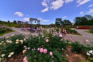 『H284石岡市観光協会長賞『四季夢花園』植竹紫芳』の画像