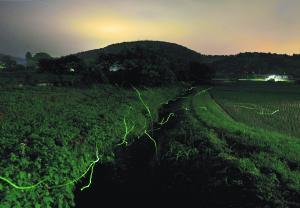 『H2810入賞『初夏光跡』小塙馨』の画像