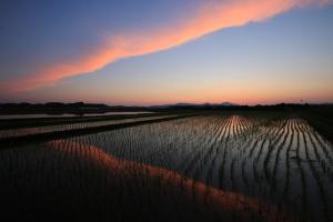 『H2820入賞『三村慕情』田上和喜』の画像