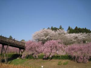 『シダレ橋』の画像