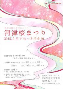 『H30河津桜まつりチラシ表』の画像