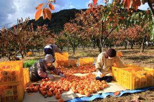 『『収穫』の画像』の画像