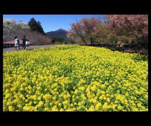 『春めきて』の画像