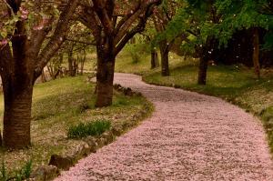 『風土記の花道』の画像